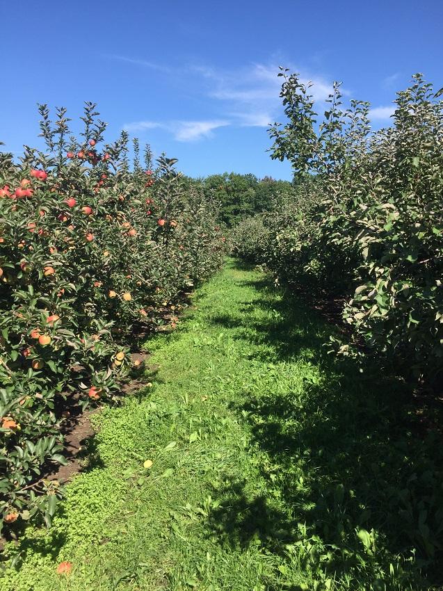 orcharda